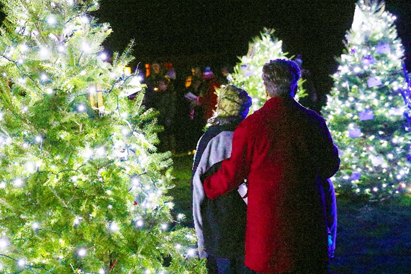 honor a life tree lighting